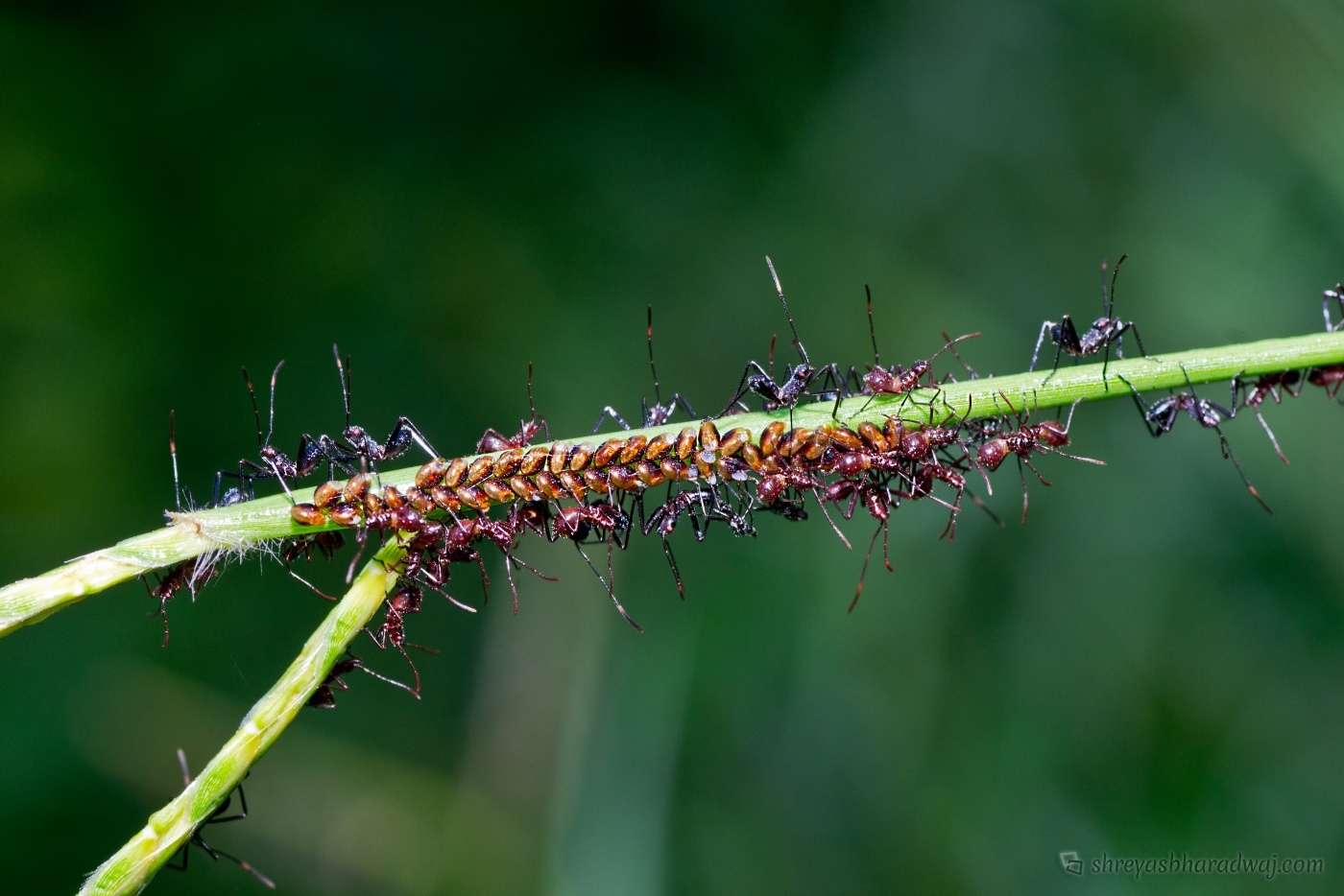 Insects and Macros